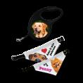 amici_cani